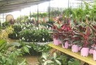 Abbotsford QLD Indoor planting 6