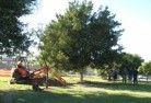 Abbotsford QLD Tree lopping 15