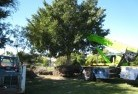 Abbotsford QLD Tree management services 4