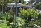 Abbotsford QLD Vegetable gardens 12