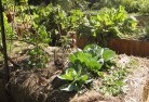 Abbotsford QLD Vegetable gardens 2