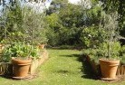 Abbotsford QLD Vegetable gardens 3