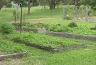 Abbotsford QLD Vegetable gardens 5