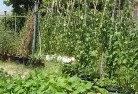 Abbotsford QLD Vegetable gardens 6